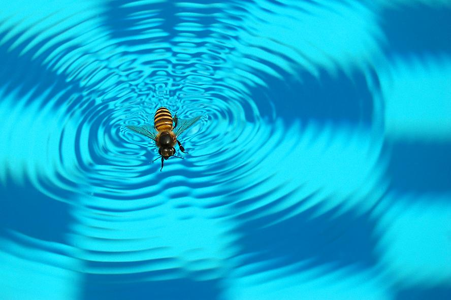 Keeping Bees Away From Your Swimming Pool