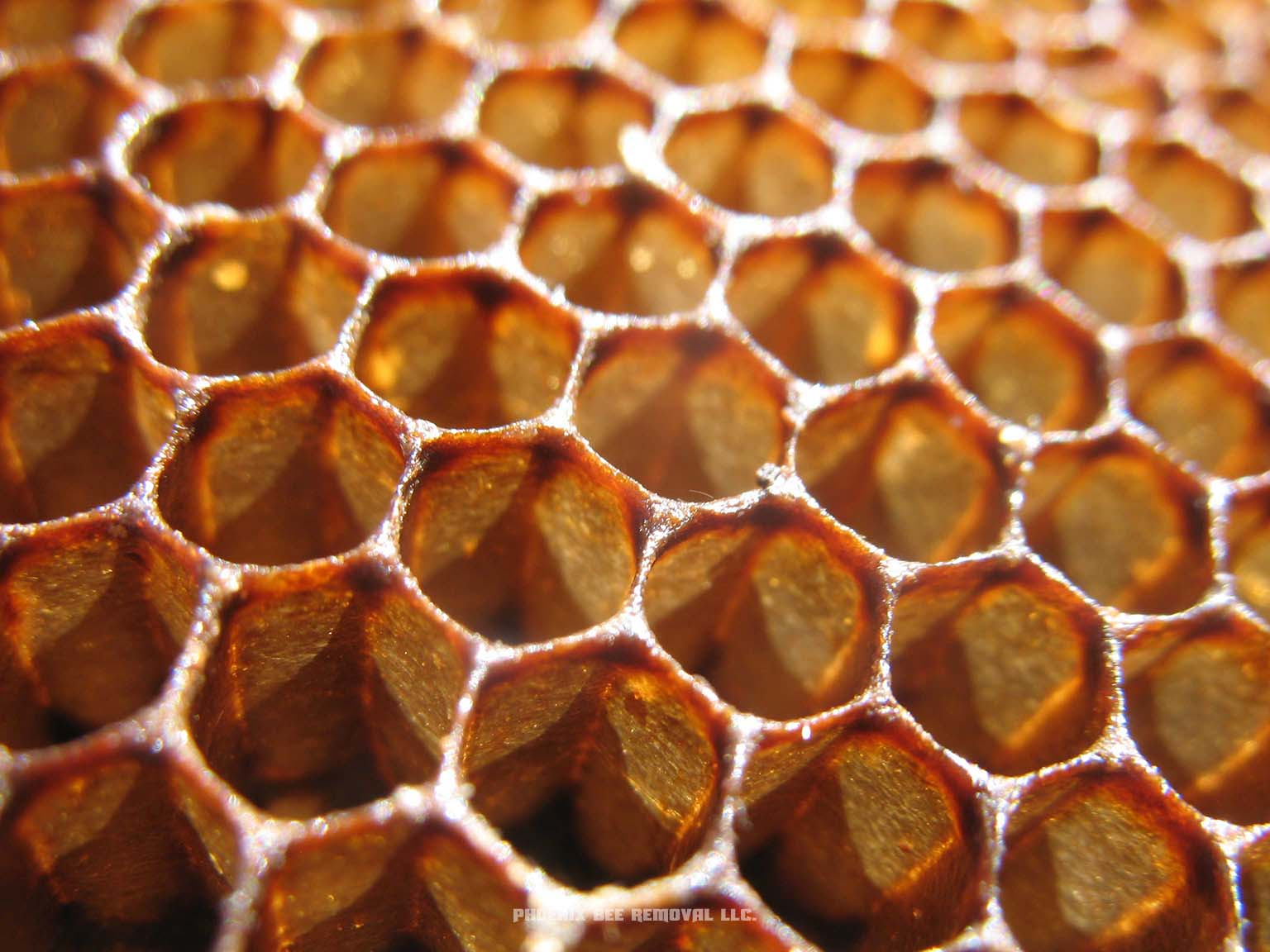 Full Honeycomb Removal and Repair Services